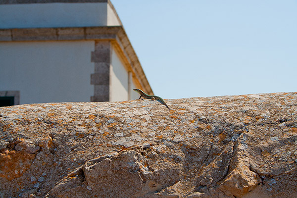 Fauna y flora de Formentera